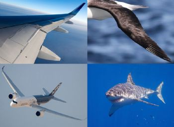 Airbus engineers study the natural world