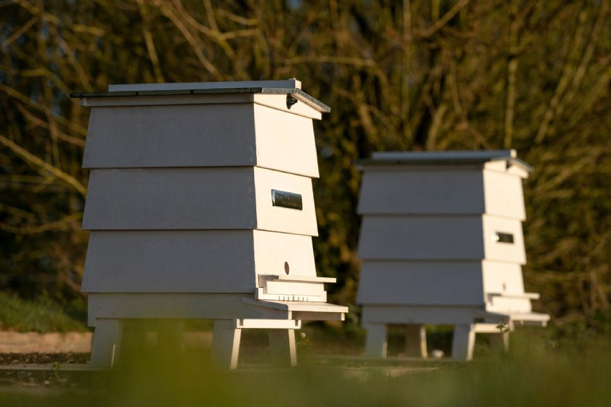 Rolls-Royce Apiary observes World Bee Day